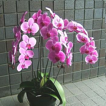 【結婚記念日 お祝い プレゼント花 74】ホワ...