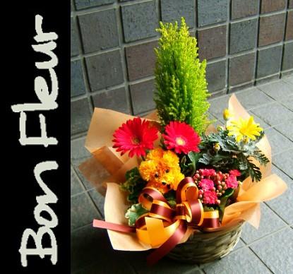 【花 プレゼント花】 おまかせプランツバスケッ...