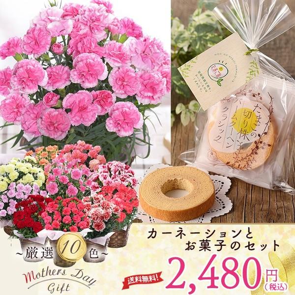 母の日 ギフト カーネーション お菓子 4号カーネ...