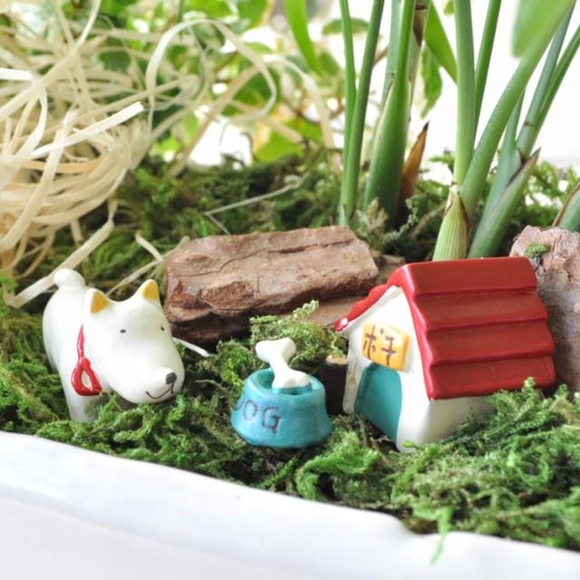 【観葉植物】「プチガーデン」〜ゆかいな仲間たち...