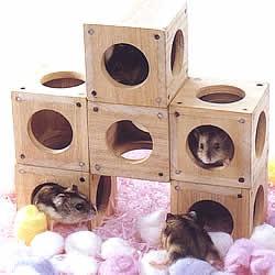 かくれんBOX 2個入り/おもちゃ かじり木 自然...