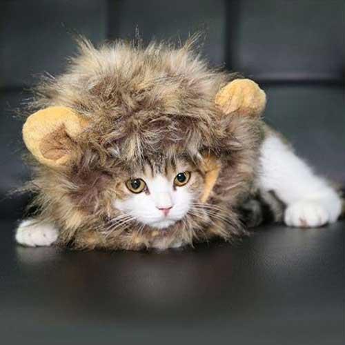 ハロウィン コスチューム 猫・子犬用 ライオンの...