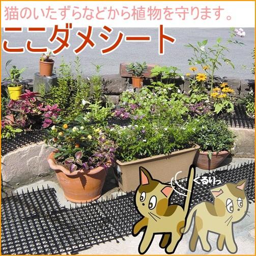 猫よけ ここダメシート 10枚入 園芸 ガーデニング...
