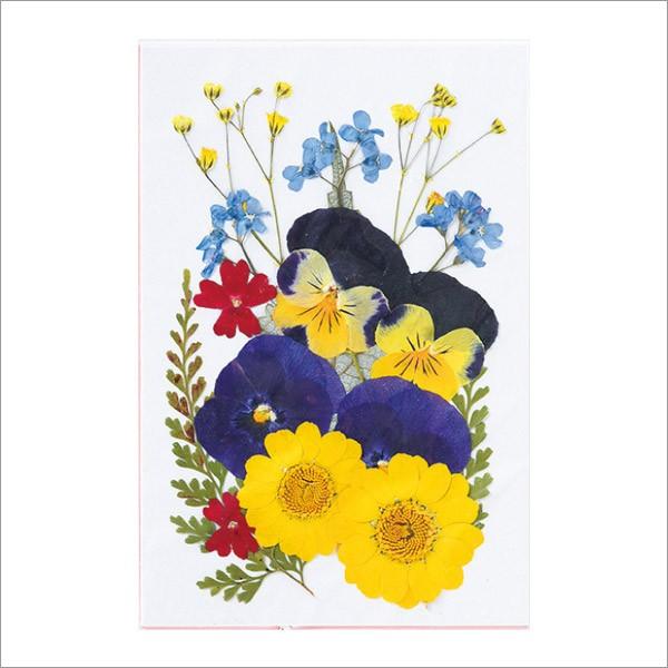 ★押し花ミックスパック A /FF603M-A