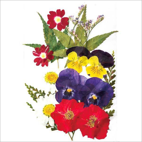 ○押し花ミックスパック C /FF603M-C