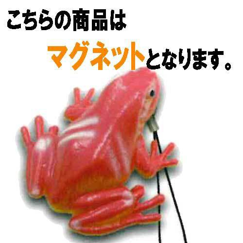 蛙 脊推動物亜門 両生網カエル目 17:カエルマグ...