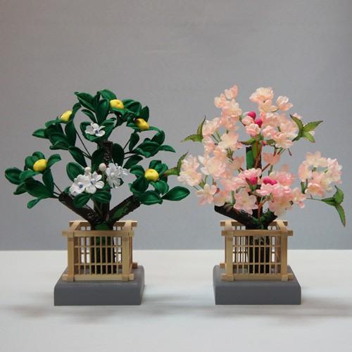桜橘 紅豆(高さ18cm)