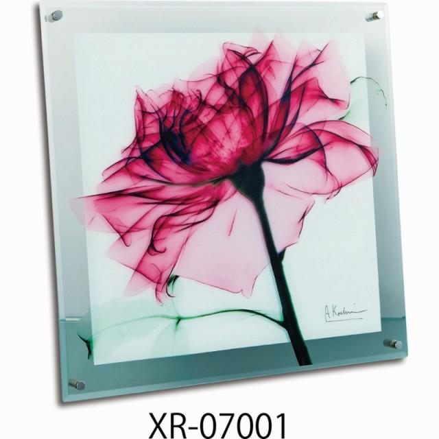 《名画》《アート》X RAY ガラス アート Lサイズ...