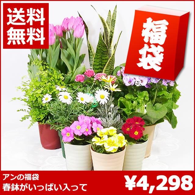 【新春福袋】春の鉢植えの福袋 【送料無料】