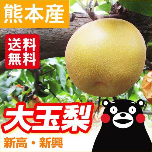 【クール便送料無料】 熊本産  大玉 梨  5kg前後...