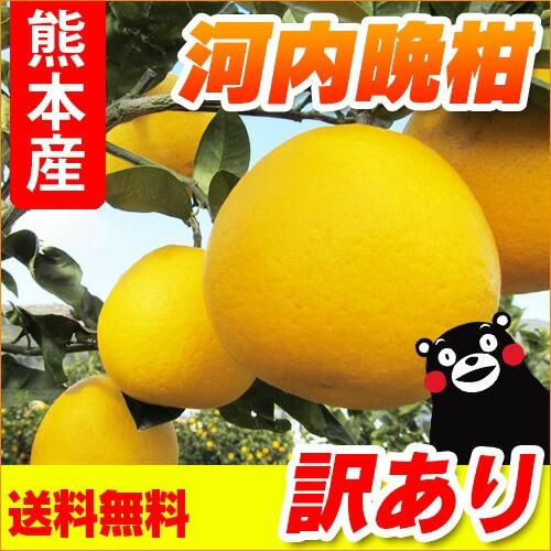 【 送料無料 】 熊本産  訳あり 河内晩柑  10kg ...