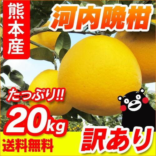 【 送料無料 】 熊本産  訳あり 河内晩柑  20kg ...