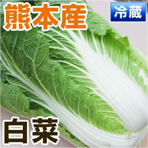 熊本産  白菜 1玉 【 野菜セット 同梱で送料無...