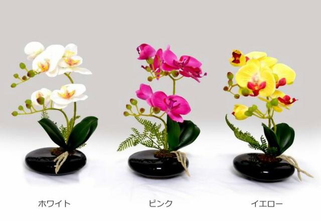 光触媒 卓上型胡蝶蘭 奏(かなで)
