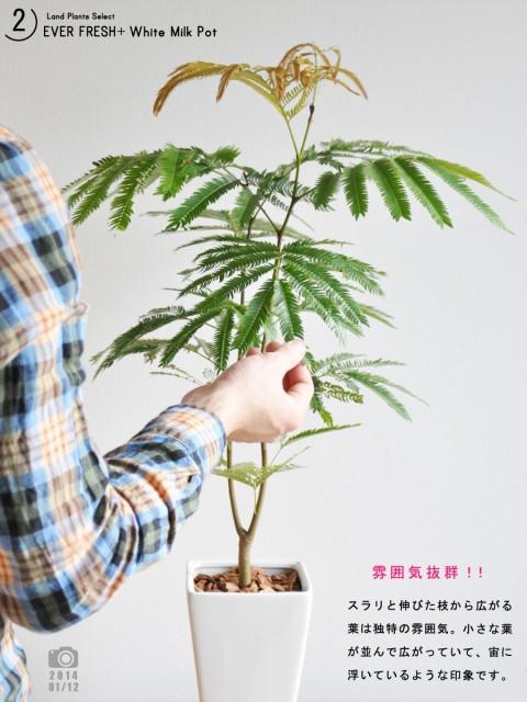 【 観葉植物 】【送料込】 table green series ...