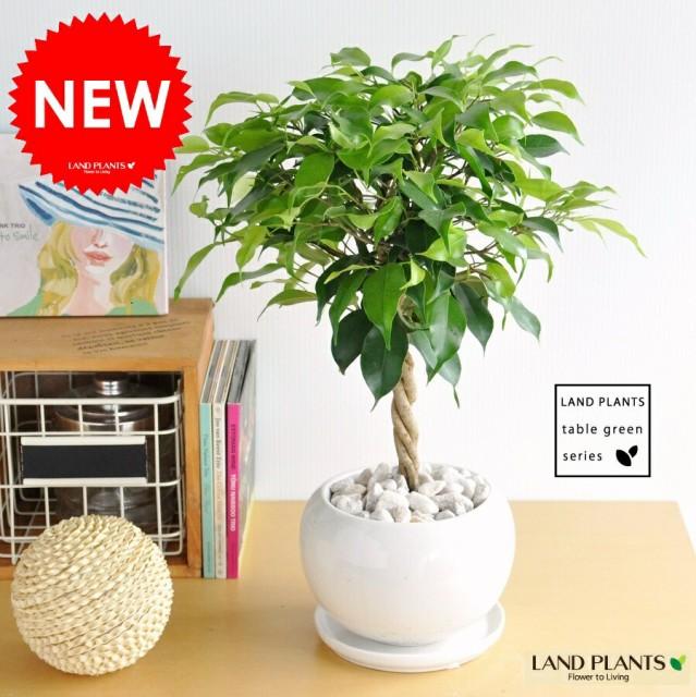 new!! ベンジャミン トピアリー 白色丸型陶器...