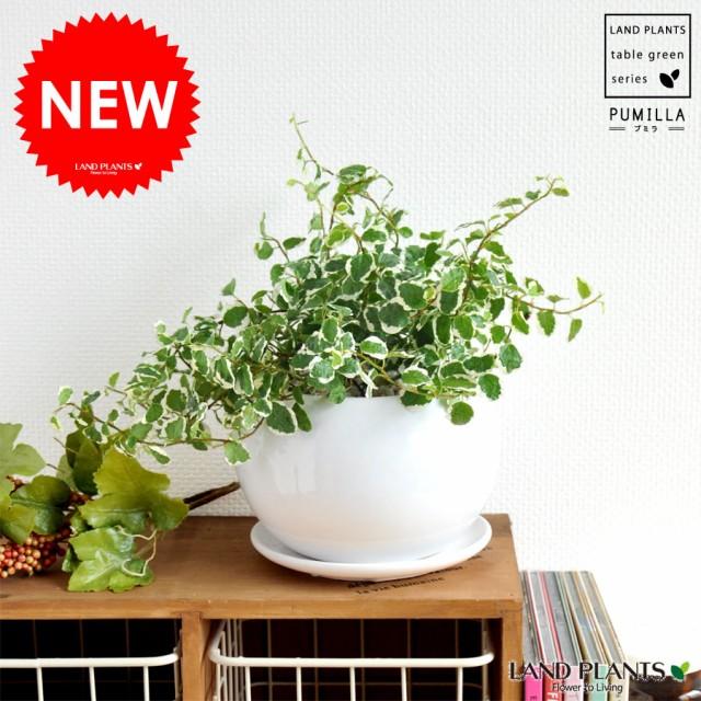 new!!    可愛い葉っぱのグリーン   プミラ 白色...