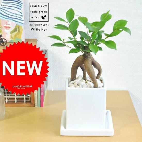 new!! がじゅまる コンパクトなスクエア陶器鉢...