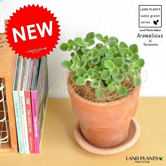new!! 香り豊かな多肉植物 アロマティカス テ...