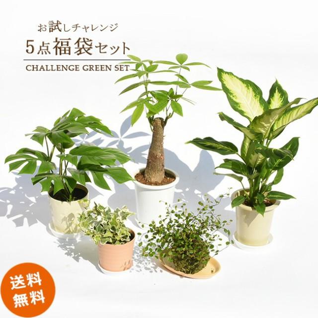 【送料無料】観葉植物お試し5点福袋セット★何が...