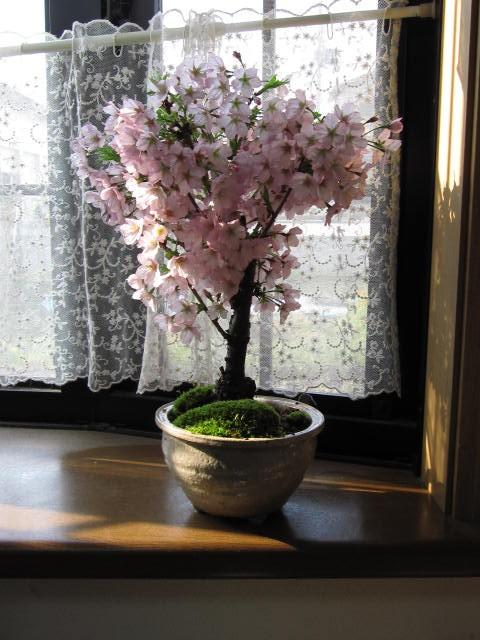 2018年4月に開花春の贈り物に人気の 自宅でお花...