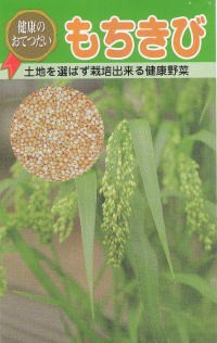 もちきびの種 1dl入 【春】 【郵送対応】
