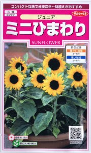 サカタのタネ ミニひまわり・ジュニア 【郵送対...