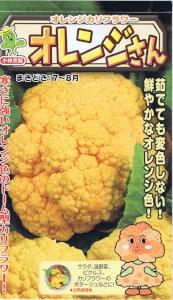 小林種苗 カリフラワー オレンジさん 約30粒 ...