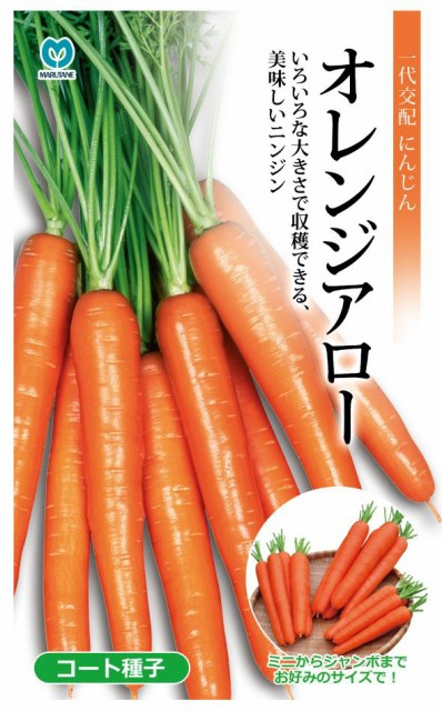 丸種 オレンジアロー人参 コート種子 約340粒(...