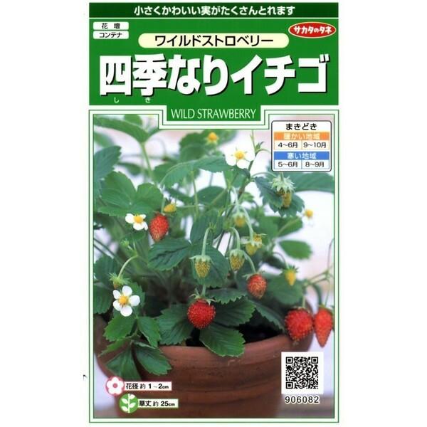 サカタのタネ 四季なりイチゴ  0.1ml【郵送対応...