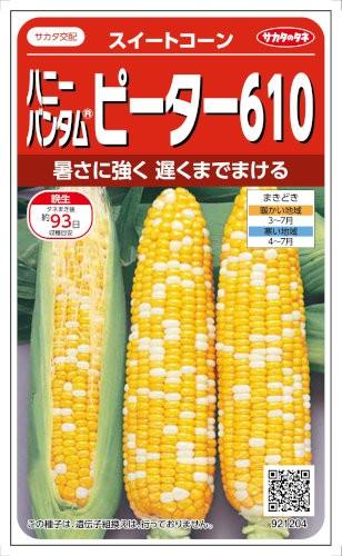 サカタのタネ トウモロコシ ピーター610 約23粒