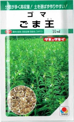タキイ種苗 ごま王 10ml【郵送対応】