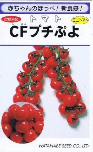 渡辺採種場 トマト CFプチぷよ コート種子約100粒...