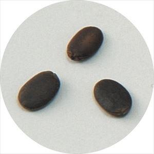 野菜の種 ヘチマ 苗床付 2736