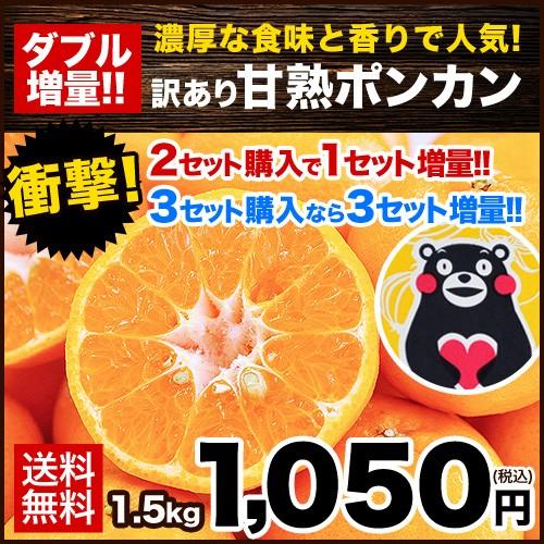 熊本県産 甘熟 ポンカン 1.5kg 送料無料 訳あり ぽんかん 2セットで1セット分増量 複数購入は1箱におまとめ 1月末-2月中旬頃より順次出荷