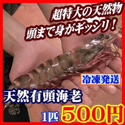 【商番1801】超特大有頭海老 1匹 頭までしっか...