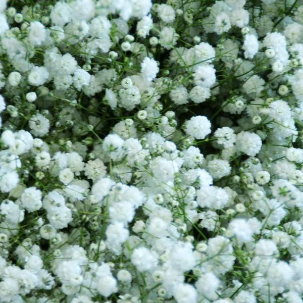 花束に追加する【かすみ草】カスミ草/カスミソウ