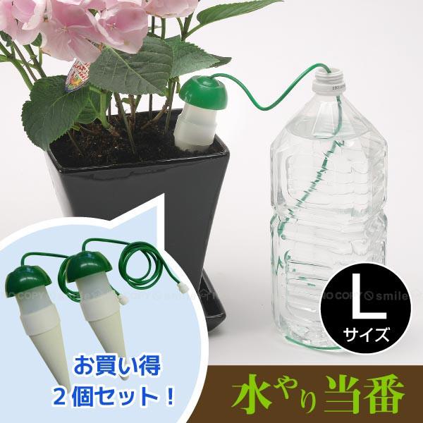 BIG 水やり当番L【お買い得2個セット】