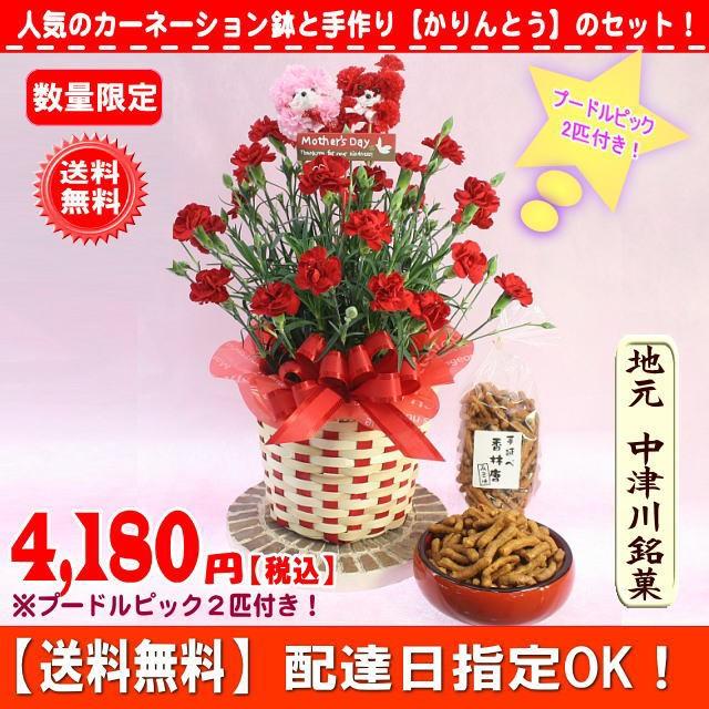 ポイント5倍!母の日★お菓子&赤カーネーション...