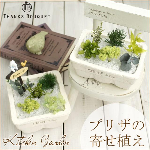 プリザーブドのグリーンの寄せ植え【送料無料】キ...