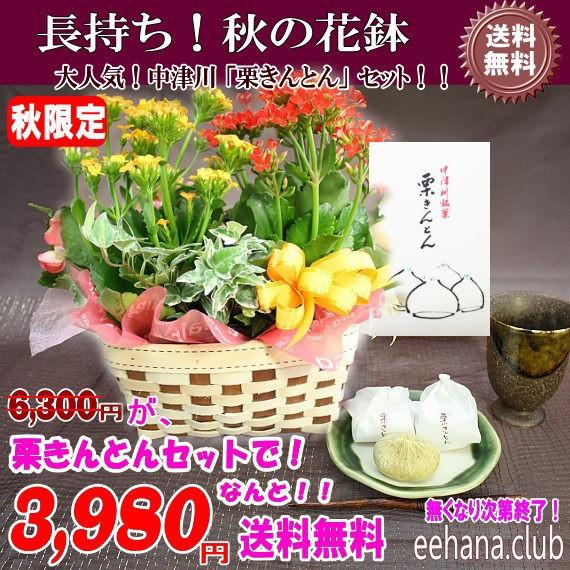 売れてます!中津川「栗きんとん」+秋の花鉢セッ...