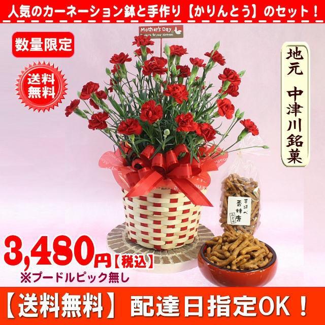 数量限定!母の日★お菓子&赤カーネーション花鉢...