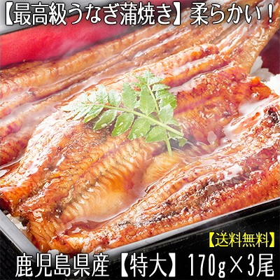 【送料無料】鹿児島県産 【特大】 うなぎ 【170g...