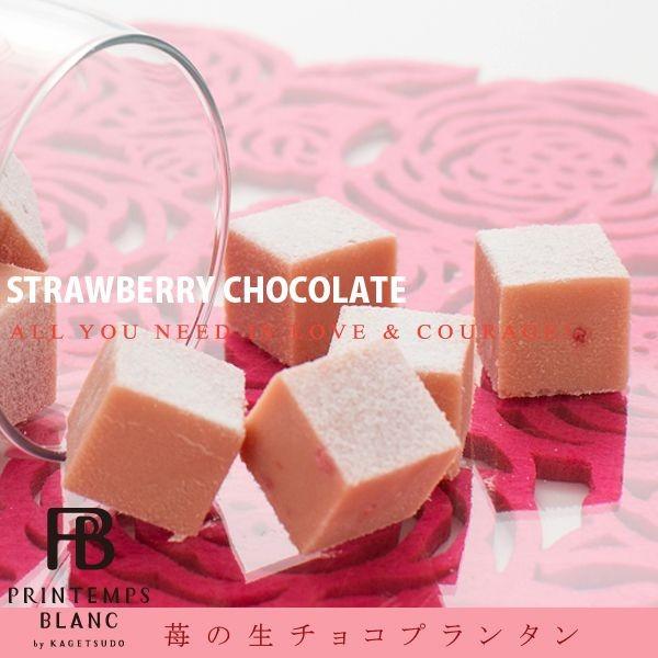 苺の生チョコプランタン24個入/チョコレート/お取...