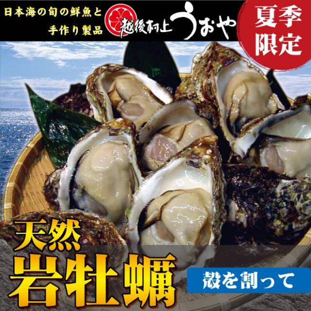 【日本海産】夏の味覚 天然岩牡蠣メディア