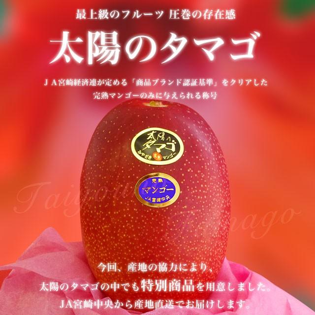 【送料無料】宮崎県より産地直送 JA宮崎中央 宮...
