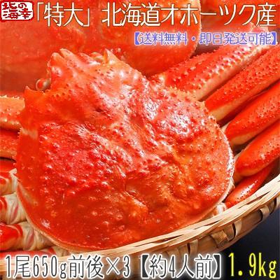 【送料無料】 北海道【特大】 ズワイガニ 姿 650g...