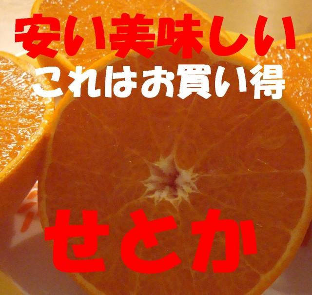 高級柑橘「せとか」送料無料3kgMからLの混合/...