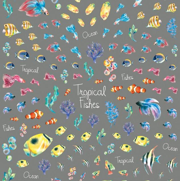 ツメキラ 熱帯魚 ★南国の海をゆったり泳ぐ魚たち...