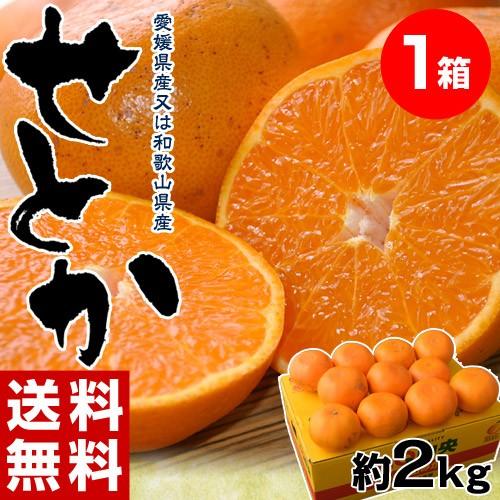 ≪送料無料≫和歌山・愛媛県産「訳ありせとか」 ...